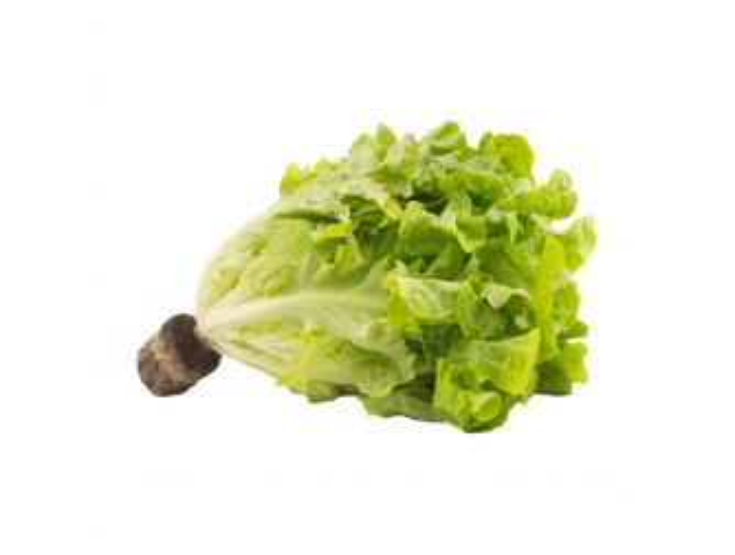 Aqua Farm Green Oakleaf Lettuce